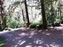 cottonwood-campground-washington-dnr-hoh-6