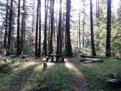 elkhorn-campground-olympic-national-forest-05