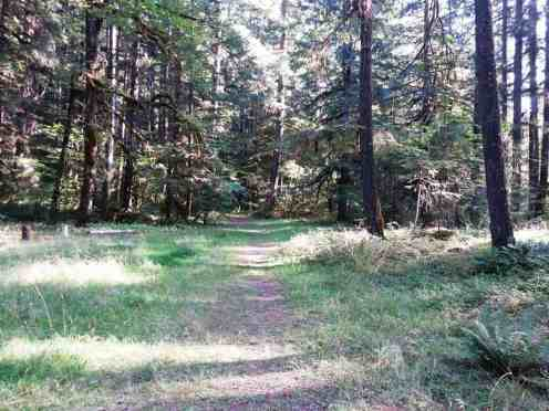 elkhorn-campground-olympic-national-forest-06