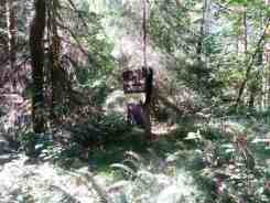 elkhorn-campground-olympic-national-forest-12