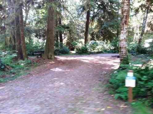 hoh-oxbow-campground-wa-7