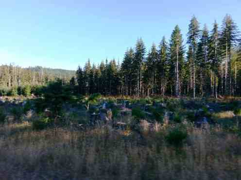 klahanie-campground-wa-13