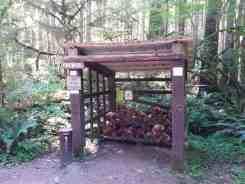 klahowya-campground-wa-0114