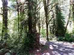 lena-creek-campground-03