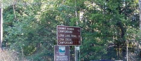 lena-hamma-signs-02
