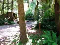 minnie-peterson-campground-forks-wa-06