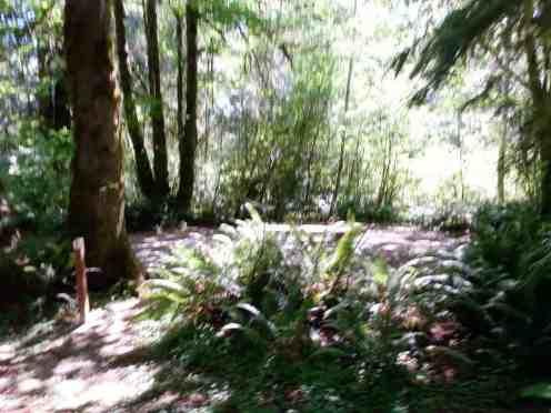 minnie-peterson-campground-forks-wa-09