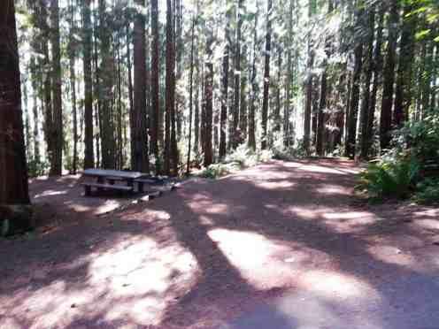 seal-rock-campground-wa14