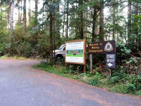 willaby-campground-quinault-wa-03