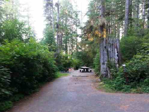 willaby-campground-quinault-wa-05