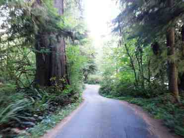 willaby-campground-quinault-wa-06