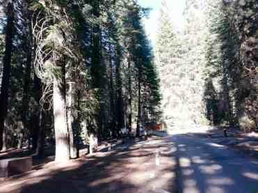 stony-creek-campground-sequoia-08