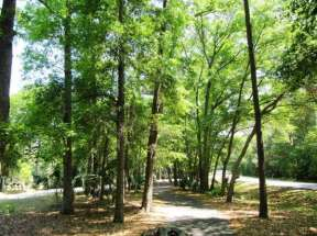 Hardeeville RV- Thomas Parks & Sites