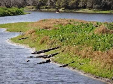 Myakka River State Park Palmetto Ridge Campground