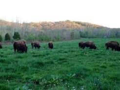 Big Bone Lick State Park