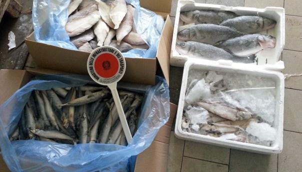 Pozzuoli e Baia la Guardia Costiera sequestra 1,5 tonnellate di anguille e 130 nasse!