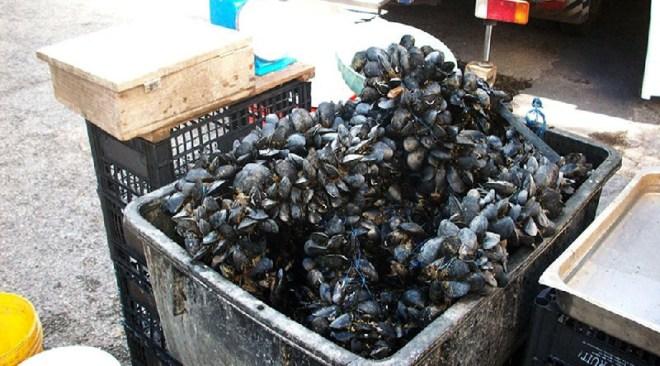 Monterusciello, sequestrati 120 chili di prodotti ittici senza tracciabilita'