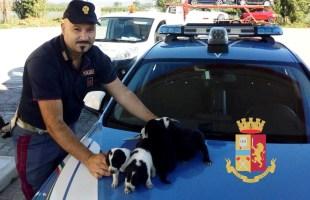 Sette cuccioli di cane salvati dalla polizia sulla Variante 7 Bis