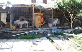 "Licola, cani allevati in un ""lager"" denunciata una 40enne|Gallery"