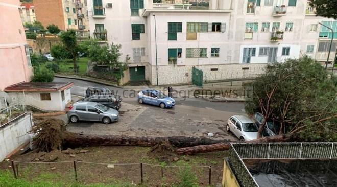 Tragedia sfiorata a Soccavo, il maltempo abbatte due enormi pini