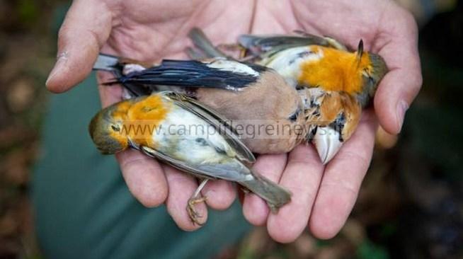 BACOLI/ Cacciatori si divertono ad uccidere piccoli uccelli, la rabbia della gente: indagano i carabinieri