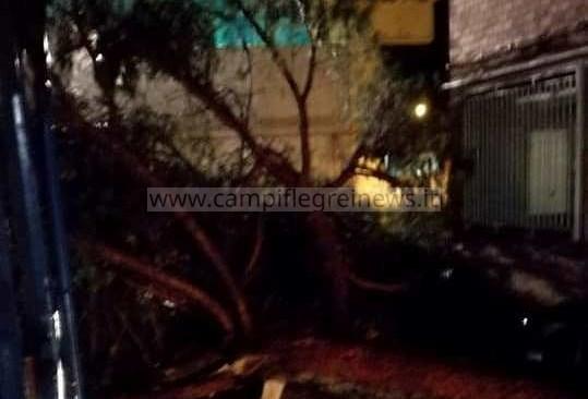 """POZZUOLI/ Tragedia sfiorata nei pressi della scuola """"Diano"""", albero si abbatte e distrugge tettoia e un auto - LE FOTO"""