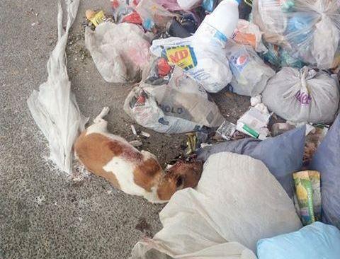 QUARTO/ Cane morto trovato tra i rifiuti in via Montagna Spaccata - LE FOTO