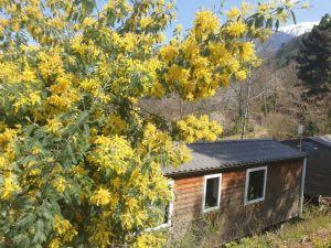 vue_mimosa_exterieur_mobil-home_panoramique_mont_canigou_camping_les_cerisiers_vernet_les_bains