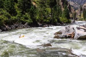 South Fork Salmon River (ID)