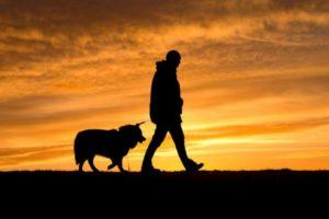 Escursionismo: 7 consigli per il tuo amico a quattro zampe!