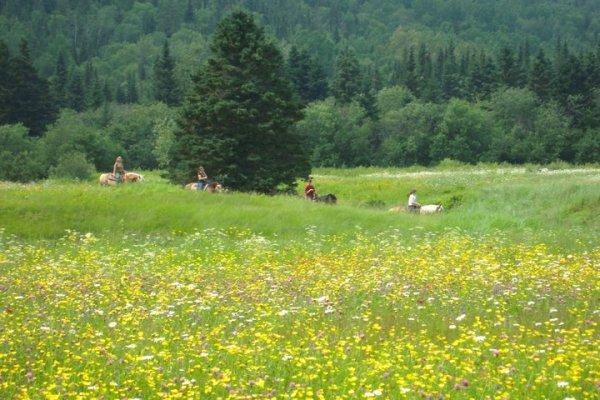 Champ de fleurs en randonnée
