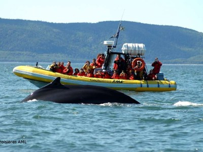 Voir les baleines en zodiac