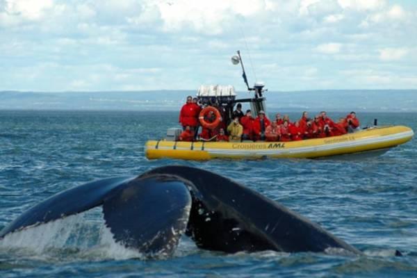 sortie aux baleines en zodiac