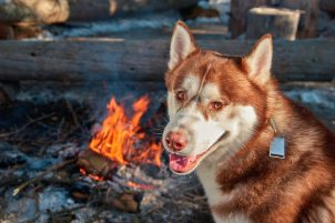 Health and Safety Tips for Camping With Your Dogs 5