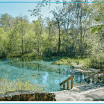 Freshwater Springs at Ichetucknee