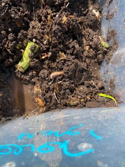 Compost Experiment 2