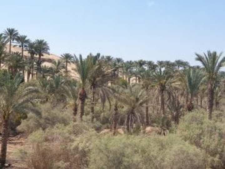 Sahara Egypt 11