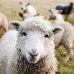 Weidezelte, Weidezelte für Pferde, Weidezelte für Schafe