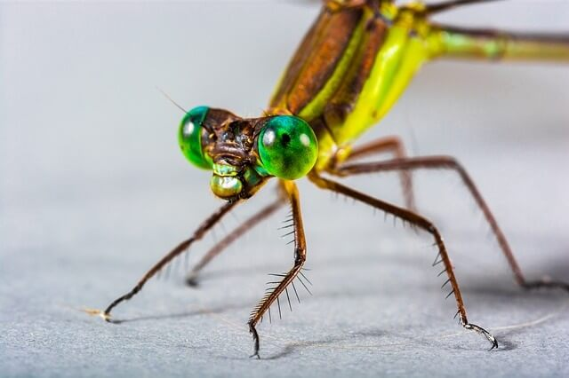 Insects and Creepy Crawlies