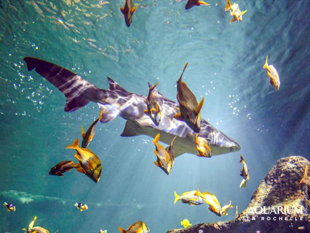Camping Proche De La Rochelle - Aquarium