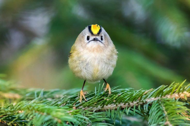 ecom_sample_ossi_nature_bird_tree_branch