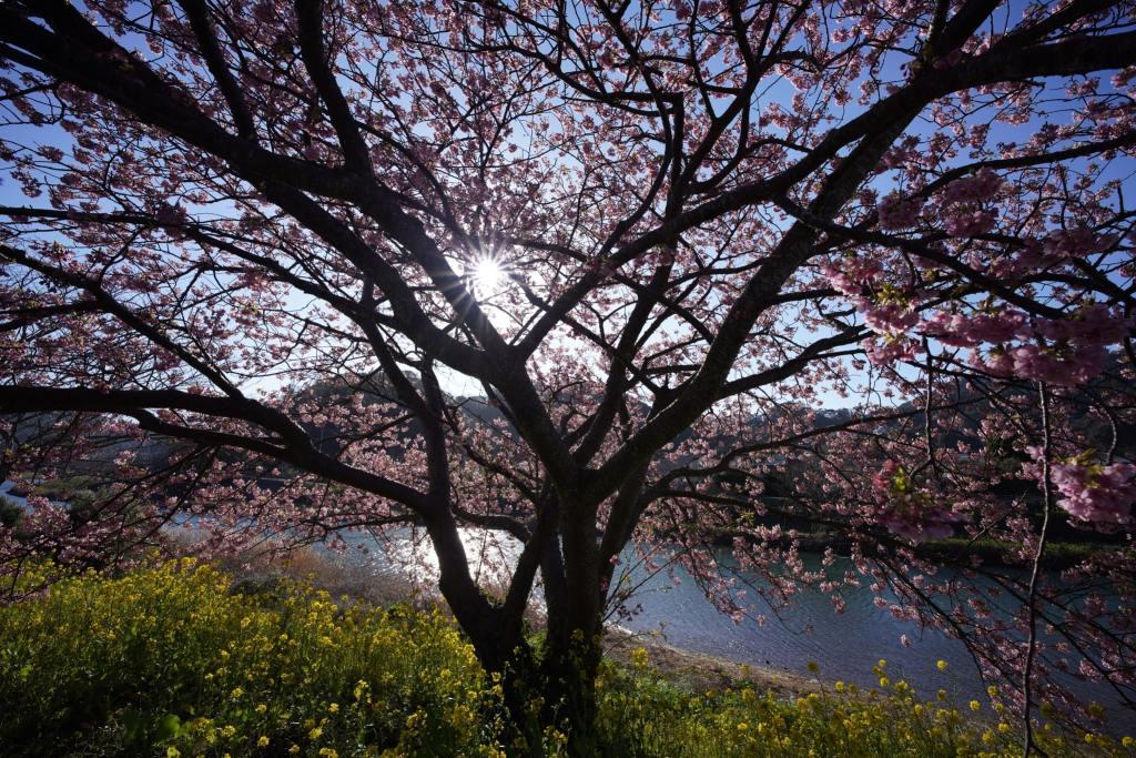 Sony FE 14mm F1.8 G Master Lens sample Image 7