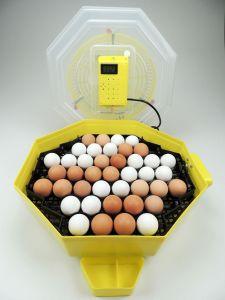 C4+ Inkubator - Incubatrice - Brutkasten - Brutmaschine - Brutapparat - Couveuse - Motorbrüter