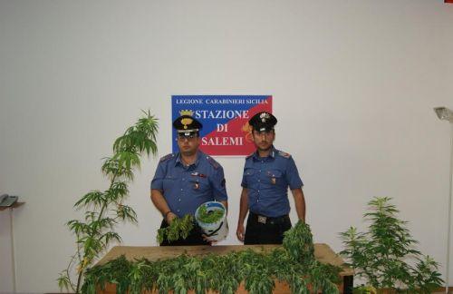 [Cc] Salemi, Scoperta piantagione di marijuana nel Bosco Leone