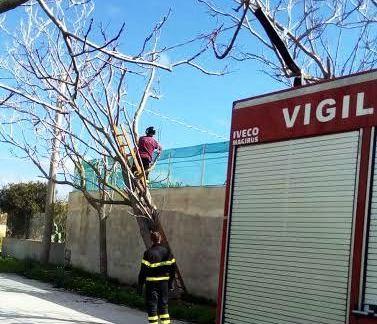 Campobello, Rischio collassamento alberi a Torretta Granitola: messa in sicurezza dai VV.FF. [FOTO]