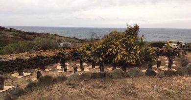 Pantelleria. Prima messa a dimora di 250 piante di Myrtus communis
