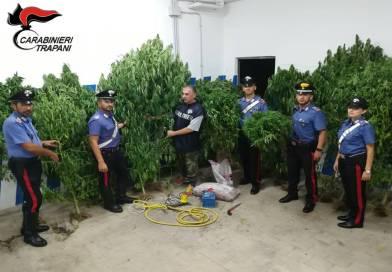 [Video] Mazara. 2 arresti dei Carabinieri per coltivazione e spaccio di marijuana