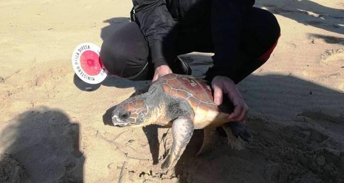 Trapani. Carabinieri salvano una tartaruga Caretta Caretta gravemente ferita [Foto]