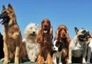 Esposizione internazionale canina a Palermo