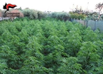 piante (1)